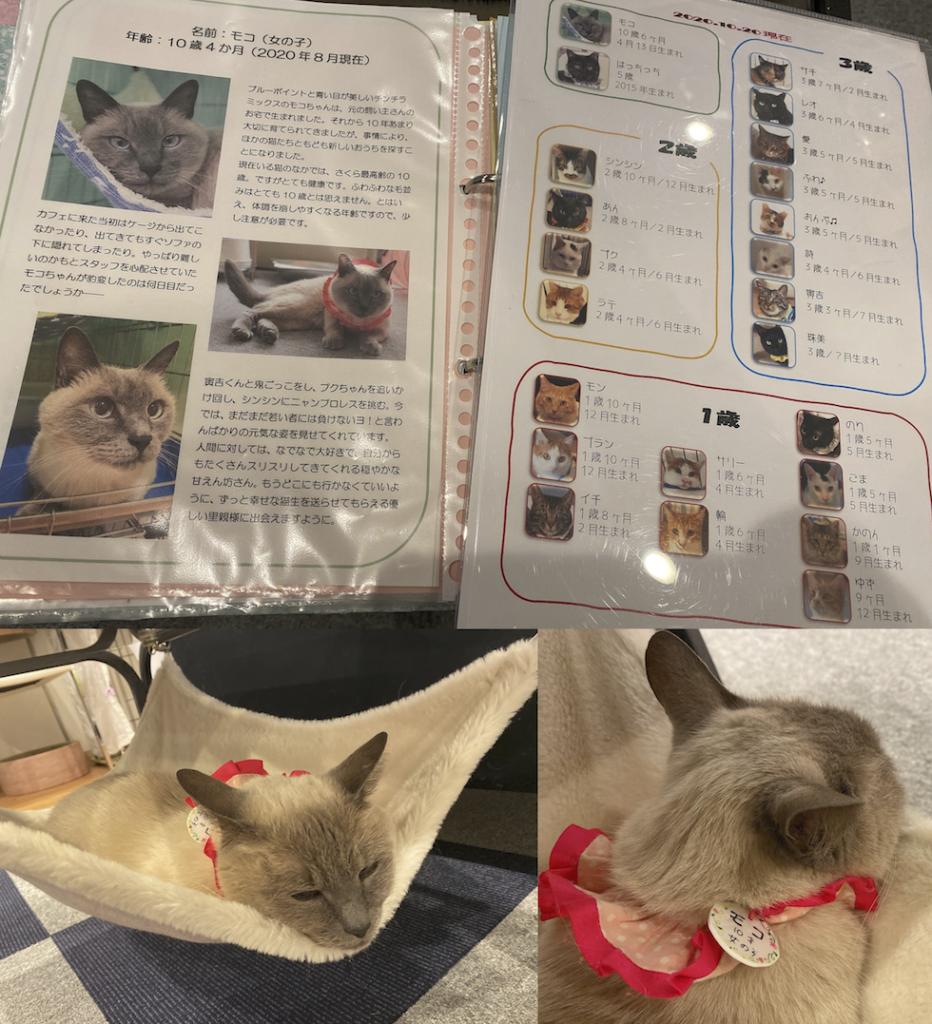 写真5 猫たちの資料とモコちゃん 店内のほとんどの猫が首に名札をつけている(筆者撮影)