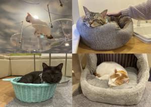 写真4 店内でくつろぐ猫たち(著者撮影)