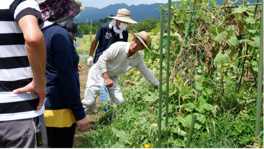 カボチャの収穫について、実際に畑で説明する刈込先生とそれを聞く参加者たち。