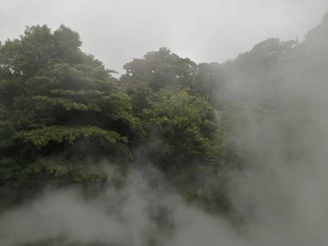 青々と茂る木々の中には霧が立ち込める=2021年5月27日、西部悠大撮影