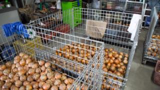 震災を越えて ― 農業再開までの苦悩と希望