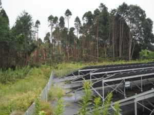 千葉県緑区のソーラーパネルと荒れてしまった人工林(高田さん撮影) ソーラーパネルの照り返しが木を痛めるだけでなく、コンクリートの上に落ちた雨水が泥水となって周辺の山に流れ込んでしまう