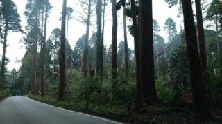 倒木被害のデータ整理と山林開発の盲点  ― 台風15号の千葉県内の被害から考える