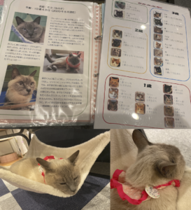 写真5 猫たちの資料とモコちゃん 店内のほとんどの猫が首に名札をつけている(著者撮影)